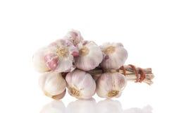 Fresh bunch garlic Royalty Free Stock Photography