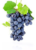 Fresh bunch of grapes with leaves isolated on white background Stock Photos