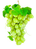 Fresh bunch of green grapes isolated on white background. Fresh bunch of green grapes isolated on a white background Royalty Free Stock Photography