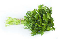 Fresh bunch of green parsley Royalty Free Stock Photography