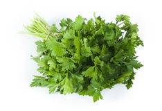 Fresh bunch of green parsley Stock Photos
