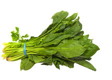 Fresh bunch of healthy spinach Royalty Free Stock Images