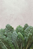 Fresh bunch of kale Stock Images