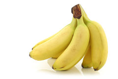 Fresh bunch of mini bananas Stock Photos