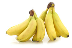 Fresh bunch of mini bananas Stock Images