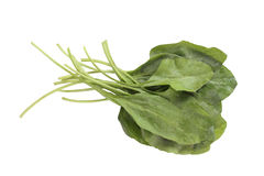 Fresh bunch of organic spinach  on white Stock Images