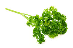 Fresh bunch of parsley Stock Photos