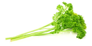 Fresh bunch of parsley Royalty Free Stock Photo