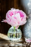 Fresh bunch of pink peonies on Dark Rustic Background. Card Concept,copy space for text Royalty Free Stock Image