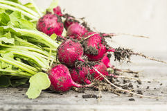 Fresh bunch of radishes on wooden table. In garden Stock Photography