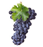Fresh bunch of red wine Royalty Free Stock Image