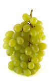 Fresh bunch of ripe green grape  Royalty Free Stock Image