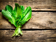 Fresh bunch of sorrel. On a wooden table Stock Photos