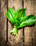 Fresh bunch of sorrel. On a wooden table Stock Images