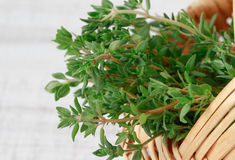 Fresh bunch of thyme Stock Image