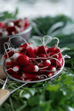 Fresh  bunches of greenery and radish on the table. Fresh radish in a colander and bunches of greenery. Close-up Stock Photo