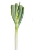 Fresh bunching onion Royalty Free Stock Photo