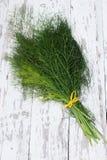 Fresh bundle of fennel Stock Image