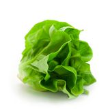 Fresh Butterhead Salad Lettuce Isolated On White Royalty Free Stock Photography