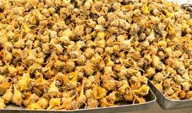 Fresh cañaillas (sea snail) Royalty Free Stock Photo