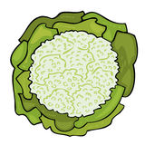 Fresh Cabbage. Royalty Free Stock Photos