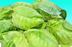 Fresh cabbage Stock Photography