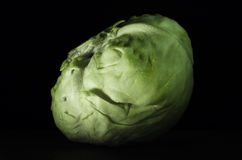 Fresh cabbage with drops. Of water close-up on a dark background Royalty Free Stock Image