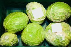 Fresh cabbage on the farmers market Stock Photography