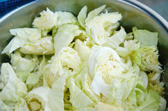 Fresh cabbage ingredient Stock Image