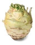 Fresh cabbage kohlrabi isolated on white background closeup Stock Photos