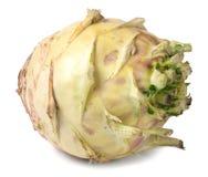 Fresh cabbage kohlrabi isolated on white background closeup Royalty Free Stock Images