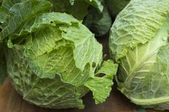 Fresh cabbage on the market - Brassica oleracea var. capitata Royalty Free Stock Photography