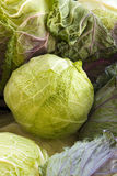Fresh Cabbage Savoy in the Garden Stock Photography