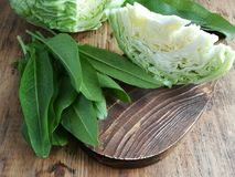 Fresh cabbage and sorrel on a cutting board. On the background of a head cabbage stock image