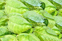 Fresh cabbage Royalty Free Stock Photos