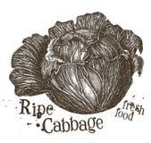 Fresh cabbage vector logo design template Stock Photography