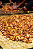 Fresh cacao beans drying in the sun. Cacao harvest on Sulawesi, Indonesia, ready to be processed into chocolate Royalty Free Stock Image
