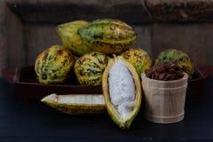 Fresh cacao fruit stock photo