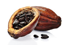 Fresh cacao fruit Stock Photo