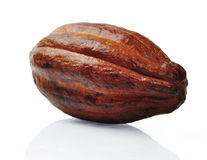 Fresh cacao fruit Royalty Free Stock Photography
