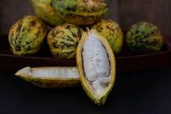 Fresh cacao fruit royalty free stock images
