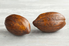 Fresh cacao fruit. Two fresh ripe cacao fruit Royalty Free Stock Photos