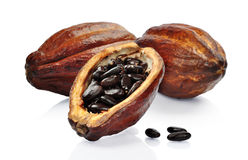 Fresh cacao fruit Royalty Free Stock Images