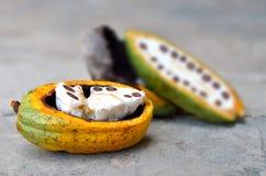Fresh Cacao fruits Stock Photo