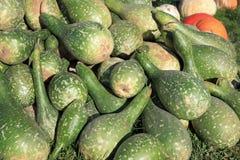 Fresh Calabash Gourd stock image