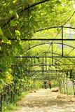 Fresh calabash hanging on the garden Stock Image