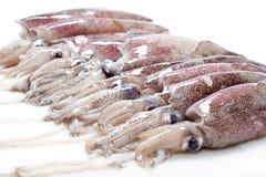Fresh Calamari. Isolated on White Background Stock Images