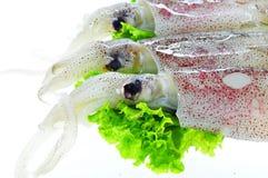 Fresh Calamari. Fresh raw squid and salad on white Stock Images