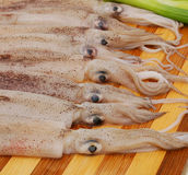 Fresh Calamari Stock Photos
