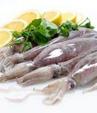 Fresh Calamari with Lemon. Close-Up isolated on white background Royalty Free Stock Photos
